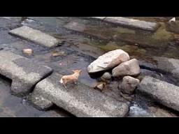 Pies bawi się sam