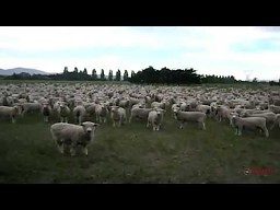 Wiec w Nowej Zelandii