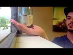 Mama kolibra znalazła dość odwagi by karmić go na dłoni