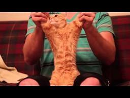 Dubstepowy kot