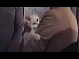 Przestraszony kot w Jamesie Bondzie