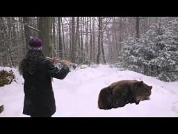 Zaklinaczka niedźwiedzi