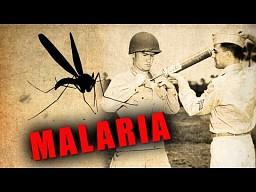 Malaria: Śmiertelna choroba przenoszona przez komary