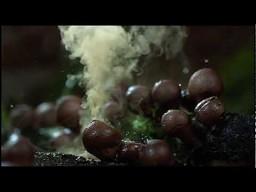 Jeden z najładniejszych i najlepiej zrobionych filmików o przyrodzie