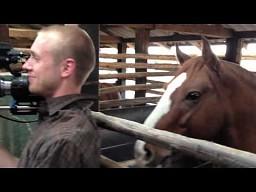 Jak koń chciał zostać gwiazdą...