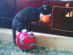 Two balls one cat