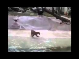 Nie karmić zwierząt w zoo