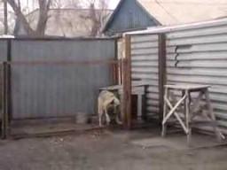 Jak uspokoić psa?