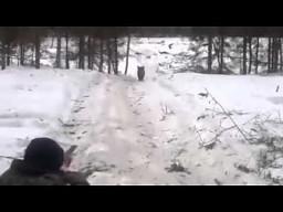 Nieudane polowanie na dzika