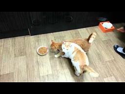Rudy kot jest dupkiem