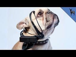 Boxxy reklamuje psiego tłumacza
