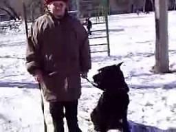 Babcia i wierny pies