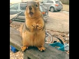 Gadająca wiewiórka