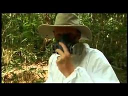 Jaka jest reakcja człowieka po dotknięciu rośliny Gympie Gympie?