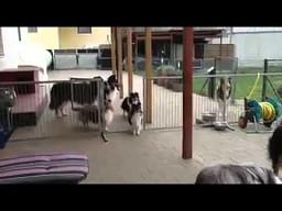 Dobrze wyszkolone psy