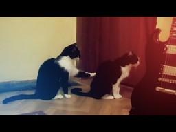 Kot przeprasza