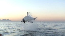 Wyskok rekina