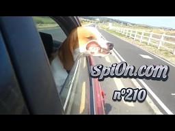 Le Zap de Spi0n nr 210