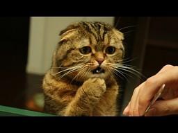 Zdezorientowane kociaki