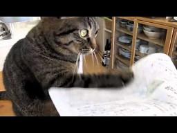 Kotka, która uderza w papier