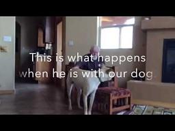 Chory na Alzheimera rozmawia z psem
