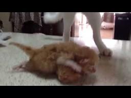 Przedstawienie dla kociaków