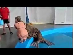Wilgotny klaps od morsa