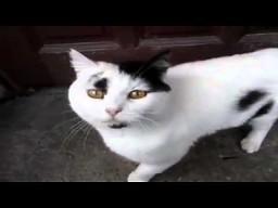 Kot, który odpowiada na pytania