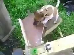 Co się dzieje, gdy inżynier posiada psa?