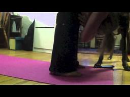 Doga - czyli joga z psem