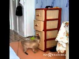 Bardzo uparty i ciekawski kot