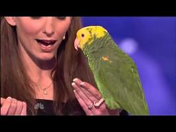 Bardzo utalentowana papuga