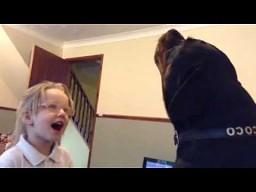 Zaśpiewaj ze mną mój rottweilerze!