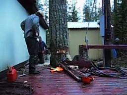 Ścinanie drzewa na mistrzowskim poziomie