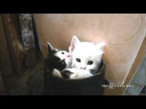 Kotki w butku