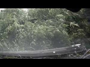 Drzewna przeszkoda drogowa