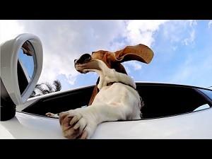 GoPro: Pies i Porsche