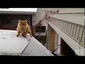 Cats Can't Jump