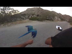 Niesmowity wyścig papugi ze skuterem