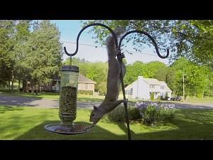 GoPro: Porażka wiewiórki
