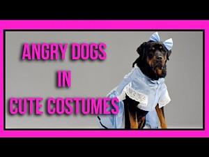 Wściekłe psy w słodkich ubrankach