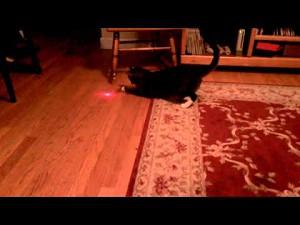 Kot z laserem na głowie