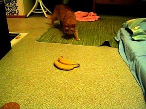 1 kot i 2 banany
