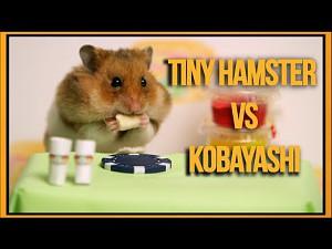 Chomik kontra Kobayashi