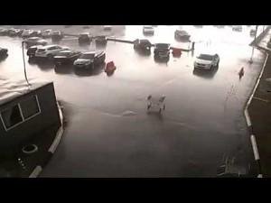 Bunt wózków na parkingu