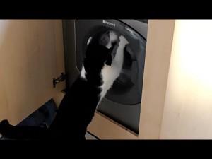 Koty i pralki