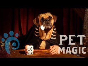 The Great Dogzini - psia magia