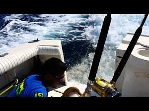 Lew morski wpada z krótką wizytą na łódkę