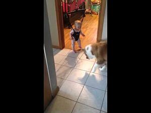 Dziwna reakcja psa na cień bawiącego się dziecka