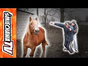 """Koń """"u Szwagra"""""""